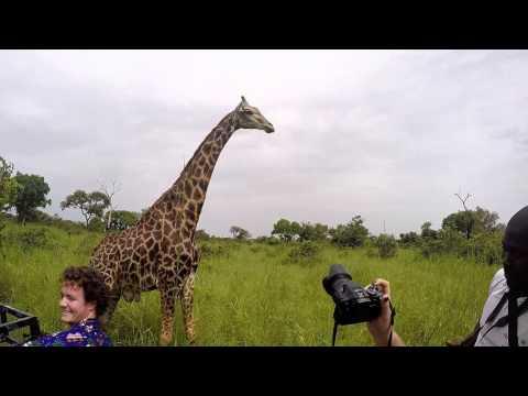Senegal Safari and Lion Walk
