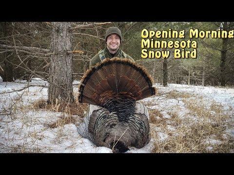 Minnesota Turkey 2018 - Calling to the Hen