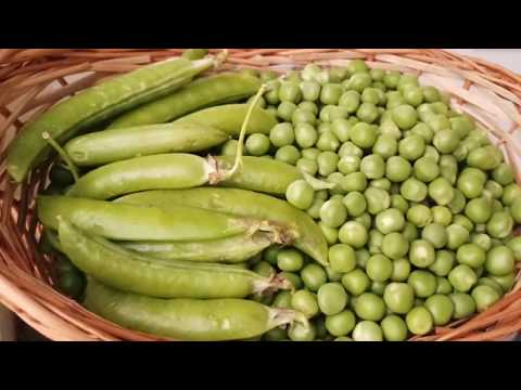 How to store Green peas for a year? Frozen green peas recipe in Tamil with English Subtitles