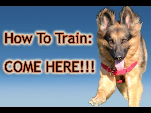 How To Train Your Dog: