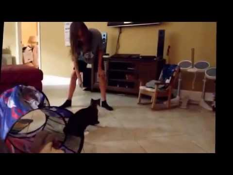 My cat Jacob does a backflip?!??!