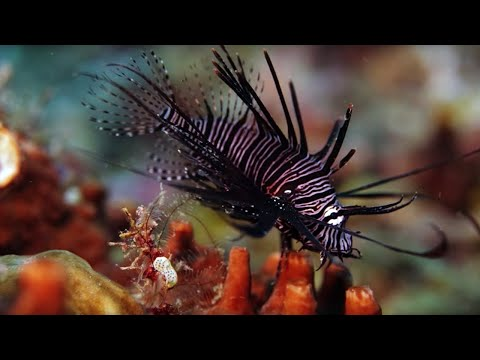 The Coral Reef: 10 Hours of Relaxing Oceanscapes | BBC Earth