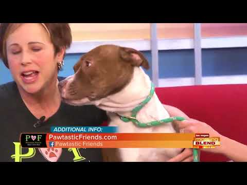 Help Homeless Dogs Find A Forever Home