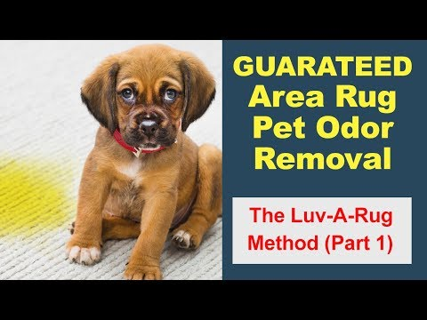 Pet Odor Removal From Area Rugs in Victoria BC - By Luv-A-Rug #1