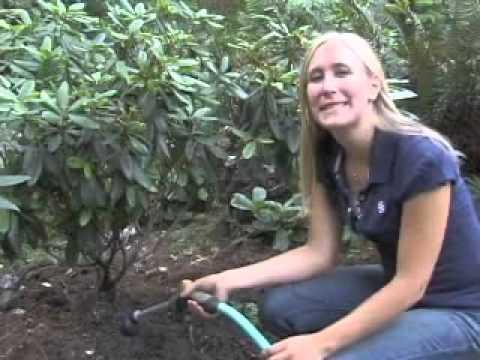 How to Mulch a Garden
