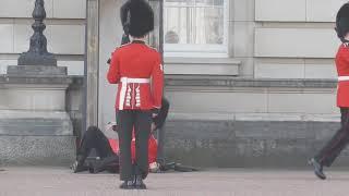 Man Wrestler Assaults Queen's Guard, See What Happened Next! LOL