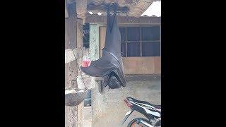 Los Videos mas Raros del Mundo 146 / Videos Sorprendentes