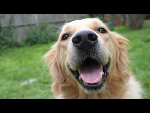 Top 10 Cutest Dog Breeds in the World - TOP 10 CLIPZ