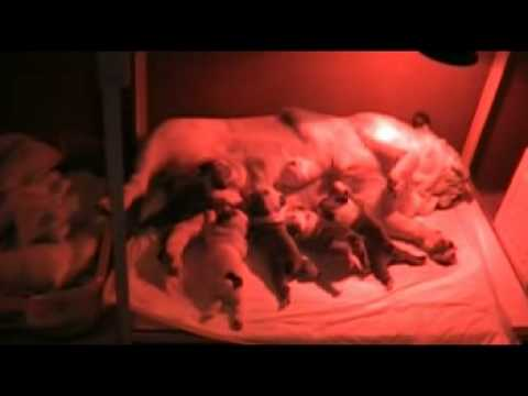 puppies Incubator for SALE