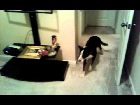 DOG VS STEAM CLEANER