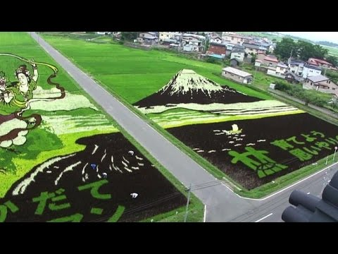 Japanese farmers turn rice fields into paintings
