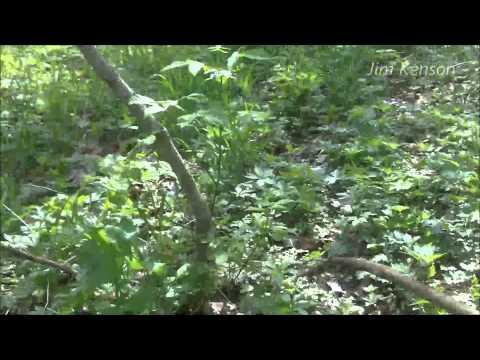 Indiana Mushroom Hunting