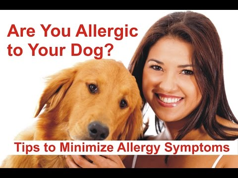 Are You Allergic to Your Dog? Tips to Minimize Allergy Symptoms