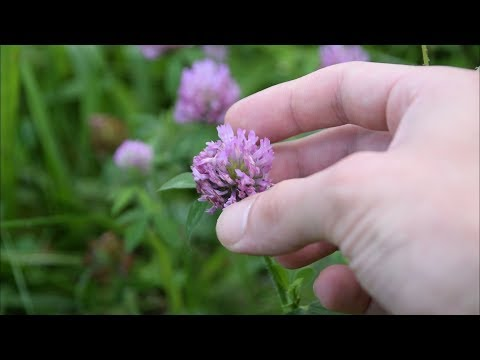5 Medicinal Plants And Herbs You Can Find In Your Yard
