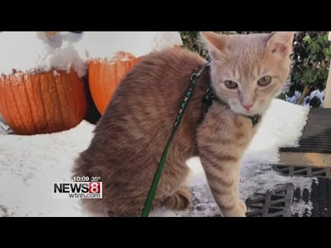 Lost cat and owner reunited after 13 months apart