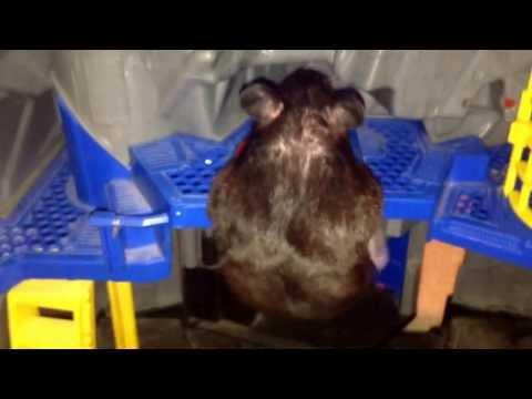 Hamster in batman house
