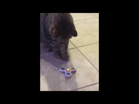 Fidget Spinner Cat Video