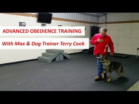 Advanced Obedience Training by Columbus Ohio Dog Trainer Terry Cook with German Shepherd, Max