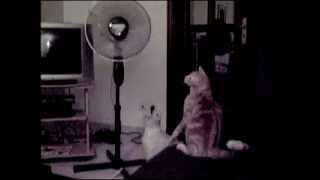 2 Cats and a Fan
