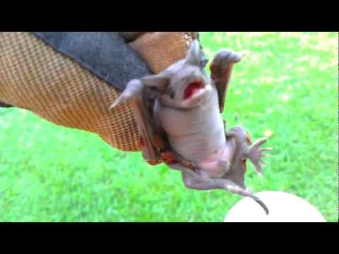 Allstar Wildlife LLC Bat Removal Columbia SC Lexington SC Charleston SC Wildlife Removal Company