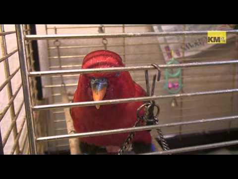 RSPCA needs new home for swearing bird