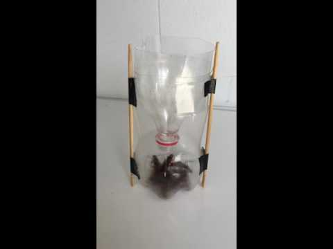 Homemade cockroach Trap from recycled PET coke bottle