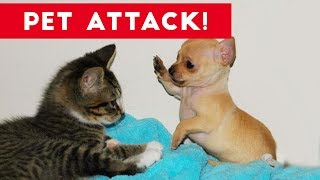 Funniest Animal Attacks Compilation July 2017   Funny Pet Videos