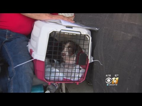 Rescue Pets Fly Out In Style