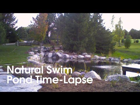 Natural Swim Pond Construction Timelapse