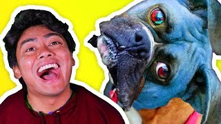 SHOCKING things people do to DOGS!