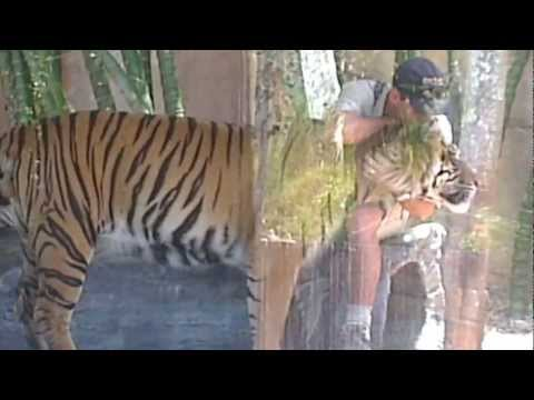 Zookeeper embracing a tiger at Australia Zoo