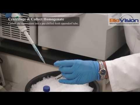 Tissue Homogenization Video | Biovision, Inc.