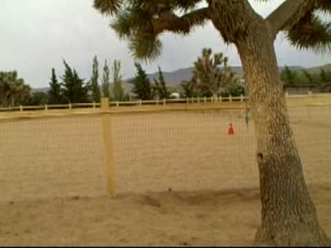 California Quality Horses For Sale  Trail Broke Beginner  Roping Paint Registered