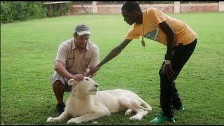HUGE LION ATTACKS SOULJA BOY