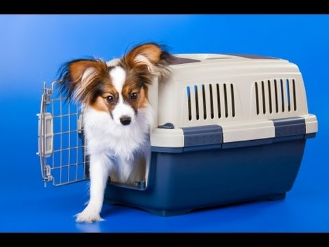 Dog Training: Puppy Crate, Teaching your Dog to Enjoy the Crate - Thriving Canine