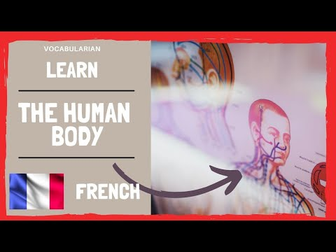The Human Body in FRENCH 💪
