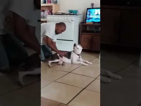 Xxx Mp4 Bf And Dog 3gp Sex