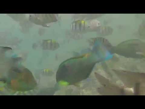 Day Dream Island Snorkel