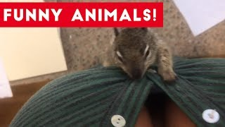 Funniest Pets of the Week Compilation July 2017   Funny Pet Videos