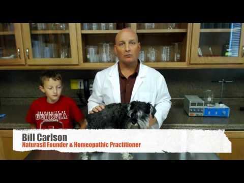 Pain-Free Dog Warts Removal at Home | Easy & Natural Dog Wart Treatment