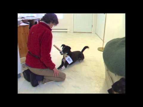 Generalizing a 'Hold' of a Service Dog Retrieve