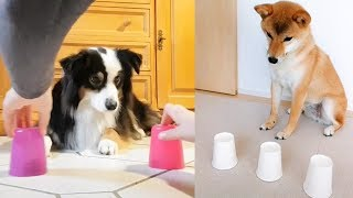 Dog Reaction to Magic Trick - Funny Dogs with Magic Tricks