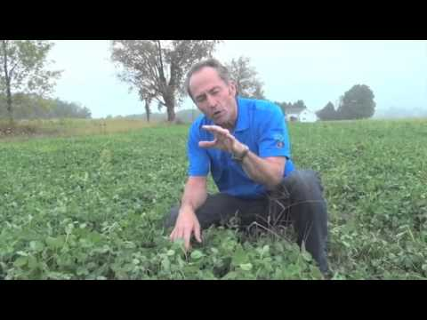 When Should You Spray Your Clover? - Peter Johnson