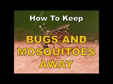 Reduce Or Get Rid Of Bugs & Mosquitoes Around The Pool
