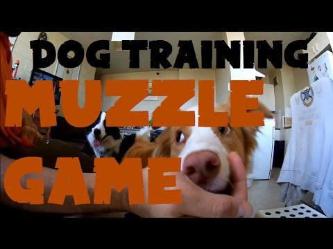 Dog Training - Tagetting Muzzle Game