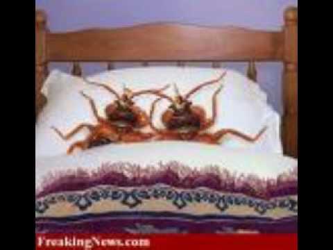 Seek Yeshua Jesus in all things... Even Bed Bugs.