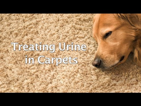 urineFREE: The Right Way to Remove Urine in Carpets