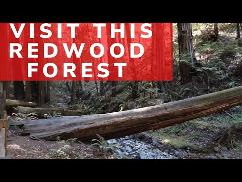 San Francisco Day Trips: Muir Woods National Monument