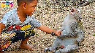 Monkey Sok play funny with kids | Monkey Sok good relationship with human kids | Monkey Daily 1455