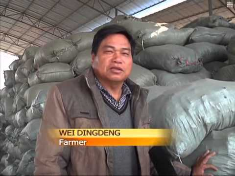 Farmers profit from cow dung